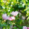 庭の花ーⅡ