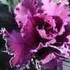 12月3日花と花言葉・歌句