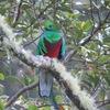 コスタリカのスモール5?コスタリカの美しい生き物を5種類ご紹介。