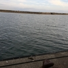 簡単に釣れる!たこ釣り(淡路島・富島漁港)