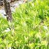 信州木曽の自然風景