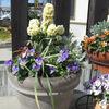 2月の寄せ植えとバラとクレマチス