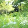 アマゾンで除草剤を購入してしまった!個人ブログ紹介はやっぱり強い!