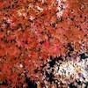 京都で秋満喫 後半