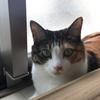 【愛猫日記】毎日アンヌさん#9
