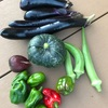 初心者の家庭菜園 2年目 ナス、ピーマン、かぼちゃ、オクラ獲れてます