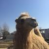 教育と原体験の効果がある動物園に行ってみた!
