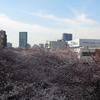 PowerShot G16を持って東京の桜を試し撮り