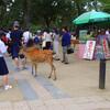 なんでか奈良で八重山の唄を聞いてきましたよ。