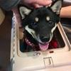 犬のペットシートどれが良い?うちの愛犬のしつけにはLIONの「ライオン アロマで消臭ペットシート レギュラー 80枚」が良かったです。