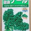 「食べる健康ケール」を水耕栽培しています。クセがないらしいので、サラダやおひたしにして食べようと思います