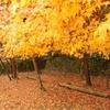 国宝のある紅葉の名所!日本遺産第一号の【旧閑谷学校】@備前市