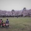 小金井公園の桜他