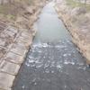 川釣り日記(令和3年3月③・藤田川釣行)