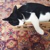 猫と暮らせた3日間