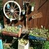庭造り ※久々の更新