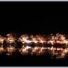 2018臥竜公園の夜桜見物にいってきました。