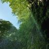 滝のレースカーテン。素波里『 不動滝』を見に行こう