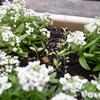 雨の日の朝のベランダの花