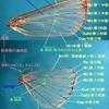 写真で見る昆虫用語1・・・蛾の翅