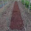 そら豆の畝作り