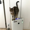 猫ズマクラスター