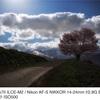 野平の桜と天の川