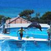 SFC修行。美ら海水族館滞在2時間の過ごし方とランチについて。