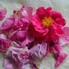 ガリカローズの蜂蜜漬けと今朝の庭の花々