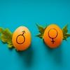 021: 子供の性別はどっち? UK妊婦生活 予定日まであと80日
