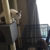 ゲージいつまで⁈ 猫の寝床とは?