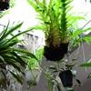 植物・園芸のスタートアップ企業の「植物に溢れたオフィス環境作り」| 憧れの「Amazon The Spheres」 #ストロボライトDAYS