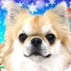 ホテルビワドッグにチェックイン【復活のティラたんとクリスマス旅行◆その5】