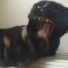 今日の黒猫モモ&白黒猫ナナの動画ー562