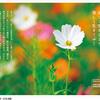 生きづらいと感じるあなたへ 「老子の言葉が散りばめられた写真集 『Taoist Saying』シリーズ」