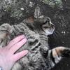 2月前半の #ねこ #cat #猫 その3