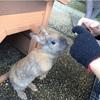 もふもふ祭り(´ω`*) 石川県「月うさぎの里」は無料で、たくさんのウサギたちと触れ合えます♪
