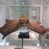 高尾599ミュージアムにシモバシラに氷華を見に行ってきました