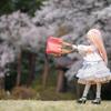 長野県の桜は見頃が長い!のでストーリー仕立てのドール撮影してきた(*´∀`)