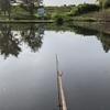 今季初の藤沼でヘラブナ釣りです。キタキツネと息子くんの再会です。(2021藤沼1)
