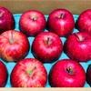 ふるさと納税でリンゴ(お礼の品)届きました!