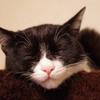 今日の黒猫モモ&白黒猫ナナの動画ー643
