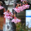 高崎駅前通り散歩 浅間山・谷川連峰・あら町諏訪神社のおかめ桜・今朝は6℃
