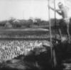 労働映画『明治の日本』、『隅田川』上映のご案内