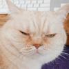 子猫の猫クラミジアについて思うこと