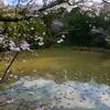 桜ヶ丘公園の池(高知県芸西)