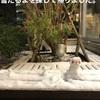 ・2021年の家事の目標と雪!雪!