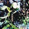 【レビュー】珠玉の短編:山田詠美