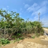 上原地区の農業用貯水池(沖縄県伊良部島)