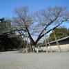 令和3年3月3日京都いけずな旅探訪 清水谷家の椋